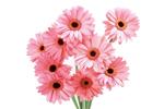 Доставка цветов - Каталог
