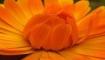 Статья. Цветотерапия для похудения, худеть без диет, похудение, как цвет влияет на аппетит