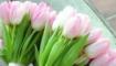 Статья. История праздника 8 марта, можно ли не праздновать 8 марта, как появился праздник