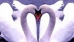 Статья. Любовь с первого взгляда чем опасна обманчива, любовь это химическая реакция