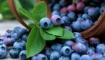 Статья. Омолаживающие продукты питания, что надо есть чтобы помолодеть