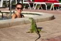 Наша отельная игуана или дикая природа Флориды