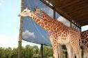 Львиное сафари в Майами (Lion Country Safari) 2 часть
