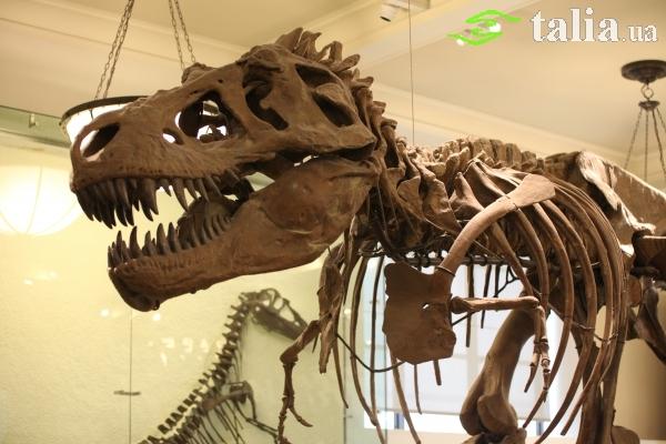 American Museum Of Natural History Saltz Internship Program