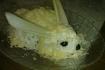 Рецепт. Пасхальный кролик. Салат с ананасами