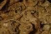 Рецепт. Куриное филе с грибами в сливочно-ореховом соусе